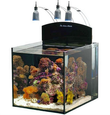 Seaview aquarium centre aqua medic blenny 80 litre pick for Aquarium 80 litres