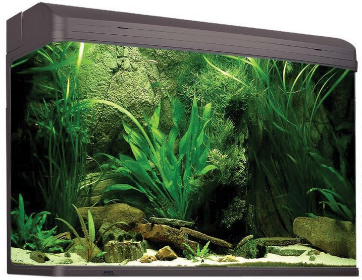 & Seaview Aquarium Centre - Aqua One AquaStyle 980T (240L) Gloss Finish azcodes.com