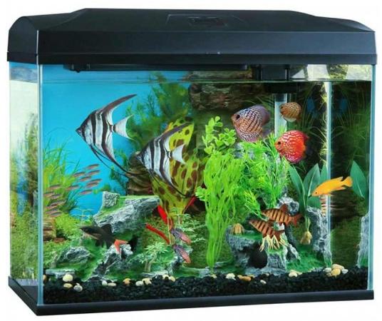 Seaview Aquarium Centre - Blue Planet Classic Aquariums (20-70L)